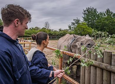 Chester Zoo Experiences