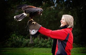 Lisa with Diva the Harris Hawk