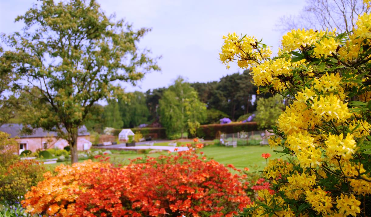 Summer at Ness Botanic Gardens