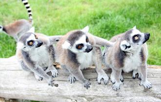 Reaseheath Zoo