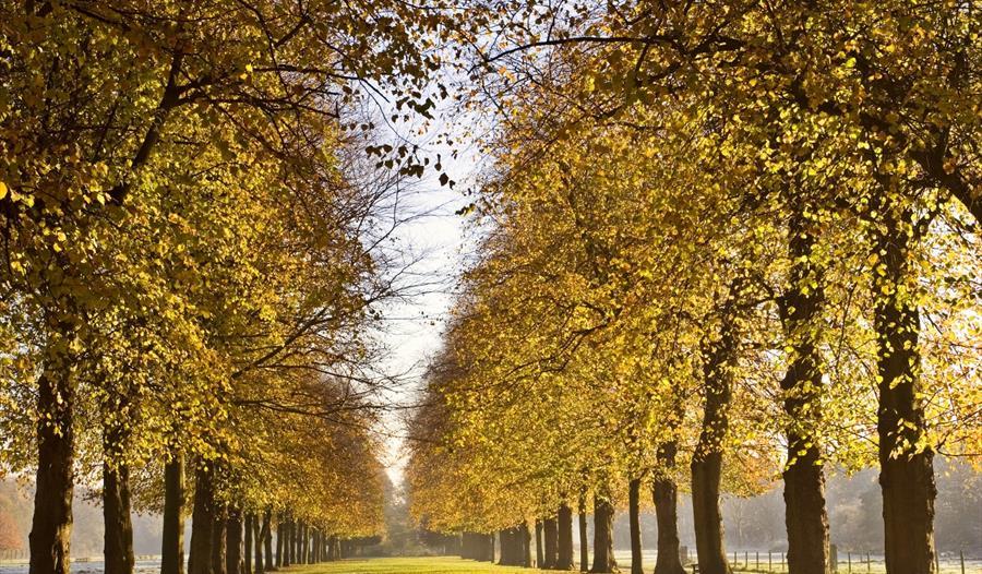 Marbury Country Park