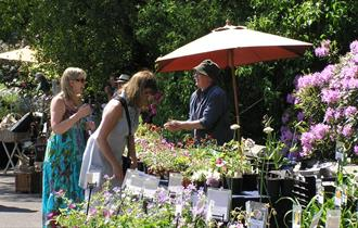 Plant hunters looking at plants and flowers