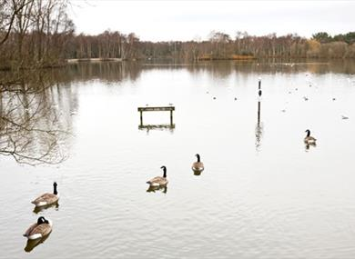 The lake at Shakerley Mere