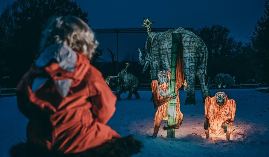 The Lanterns return this Christmas at Chester Zoo