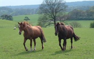 Fairboroughs Farm