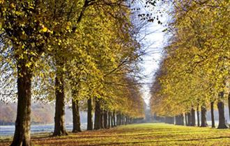 Stunning tree lined avenue at Marbury country Park