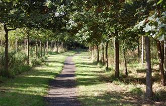 Walks for All - Tarvin Community Woodlands