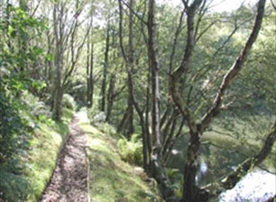 Timbersbrook Picnic Area