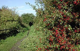 Walk the Wheelock Rail Trail