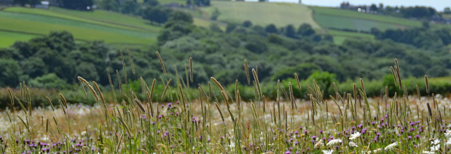 View of countryside at Barlow