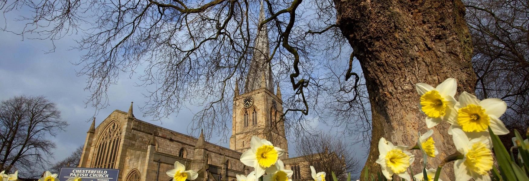 Crooked Spire, Chesterfield in spring with daffodils flowering