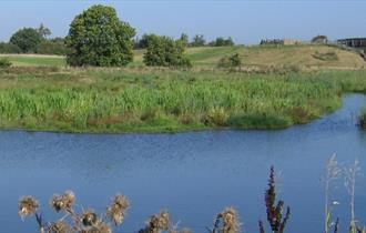 Avenue Washlands Nature Reserve