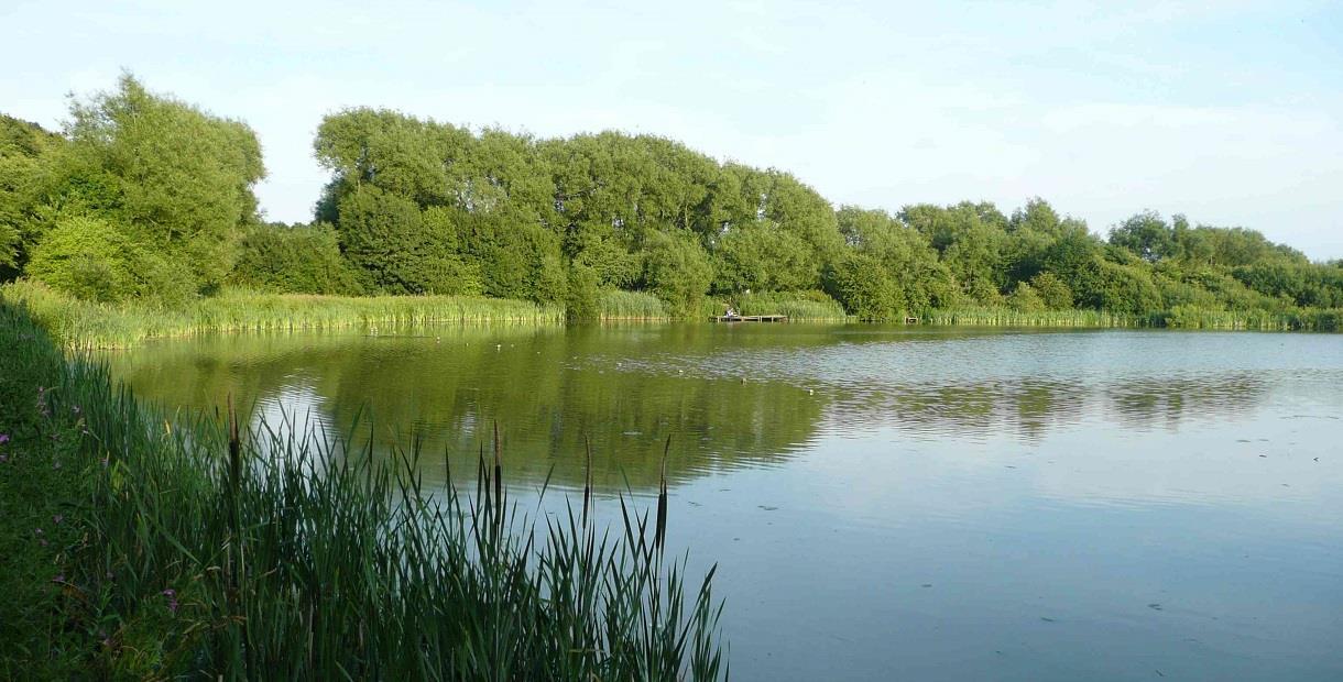 Carr Vale Flash Nature Reserve