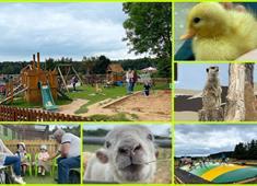 Matlock Farm Park Collage