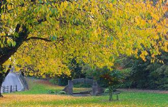 Dronfield Tree