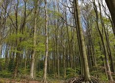 Linacre Woodland