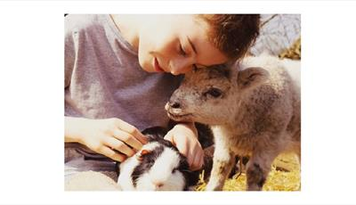 Small, cuddly animals to pet in the barn