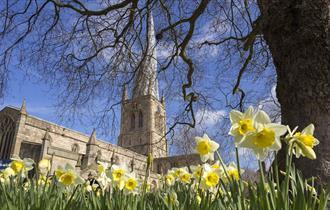 Crooked Spire Church and daffodils