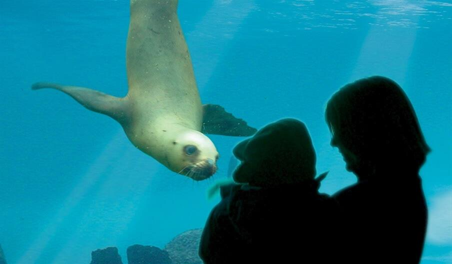 Silhouette of a family watching a sealion