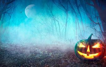 Pumpkin in the woods.