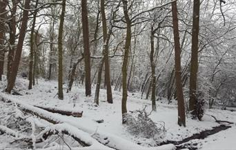 High Woods Country Park trees covered in snow