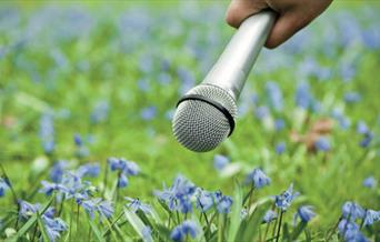 A microphone held up to a field of bluebells