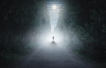 Trail of Terror - a lone figure on a foggy, tree-lined path