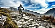 Cyclist mountain biking down rocky path