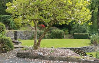 Front view of garden with tree