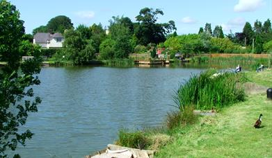 Fishing lake at Conwy Water Gardens