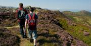 Walking towards the summit of Conwy Mountain, surrounded by heathland.