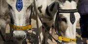 Donkey Llandudno North shore
