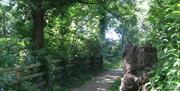 Woodland pathway at Fairy Glen