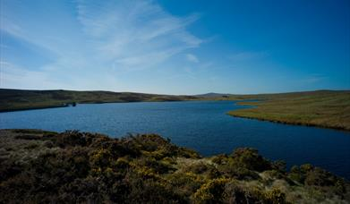 Llyn Aled coarse fishing Lake