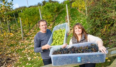 Colin and Charlotte of Conwy Vineyard, holding boxes of harvested grapes