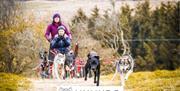 Mynydd Sleddog dogs and cart with woman and boy