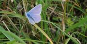 Lilac butterfly in the grass