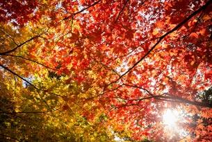 Autumn Walks - photo courtesy of Paul Groom, Forestry Commission