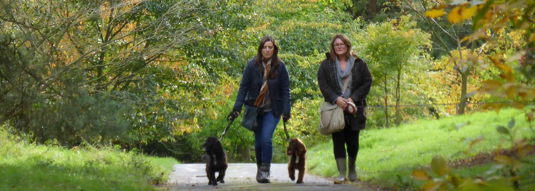 Autumn dog walkers at Batsford Arboretum