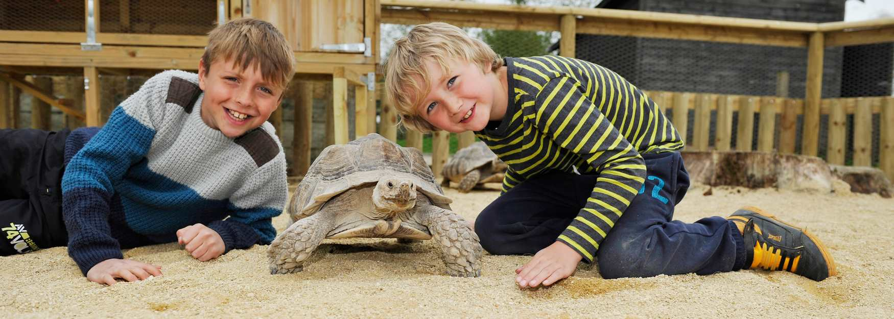 Birdland Giant Tortoises