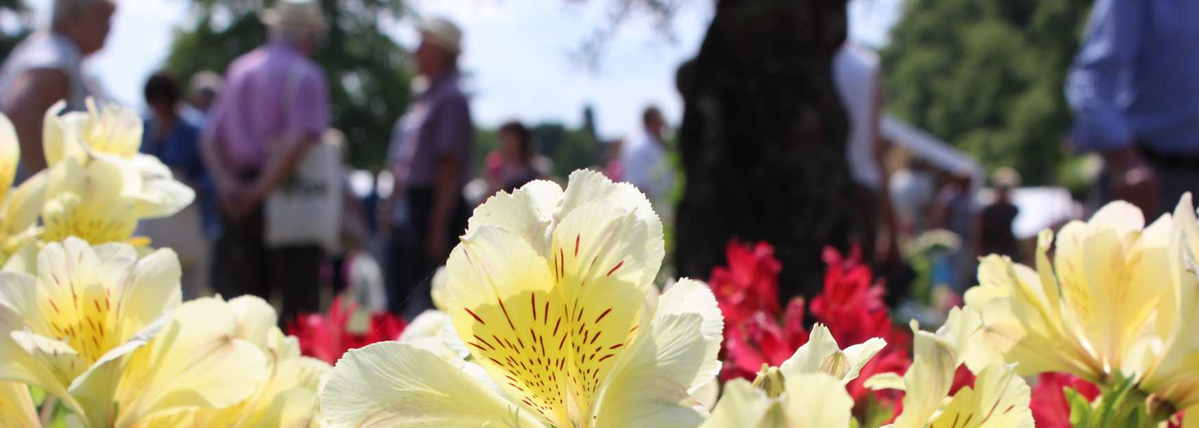 Blenheim Flower Show