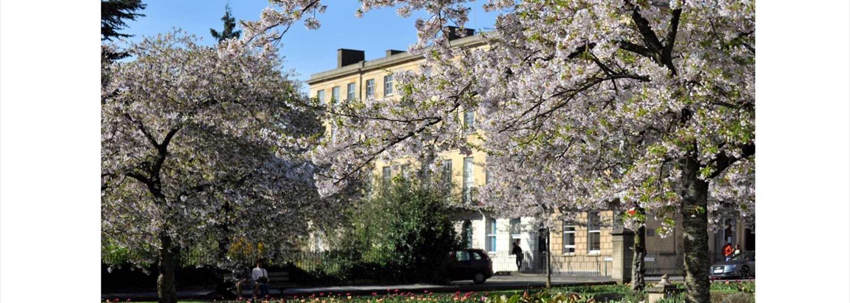 Cheltenham in blossom