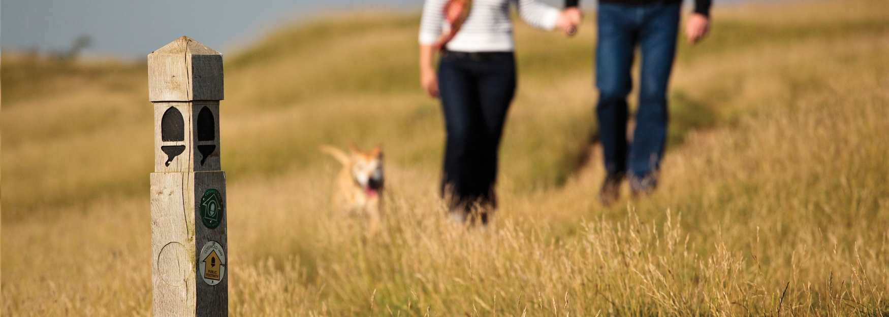 Dog walk in the Cotswolds