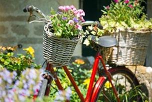 We're going bike crazy as we get ready for the Tour of Britain's visit to the Cotswolds on Saturday 9th September...