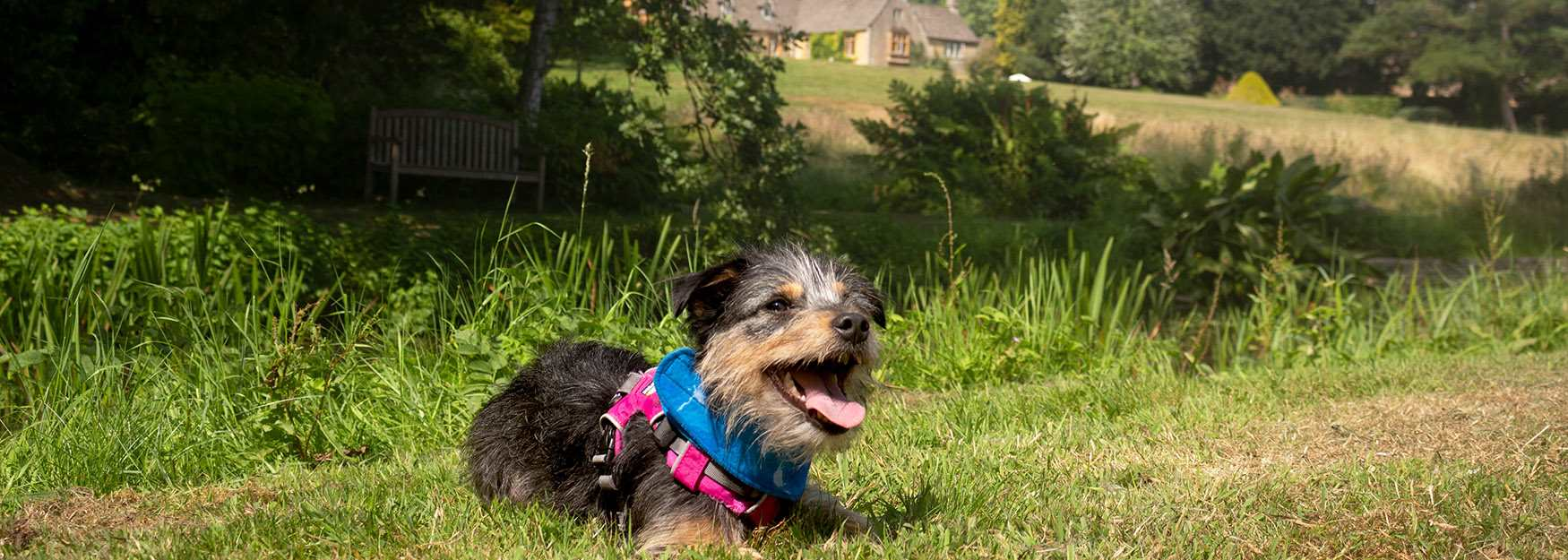 Lords of the Manor - another dog friendly Cotswold hotel