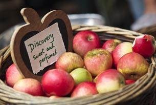 A basket of Discovery apples at Stroud farmers' market