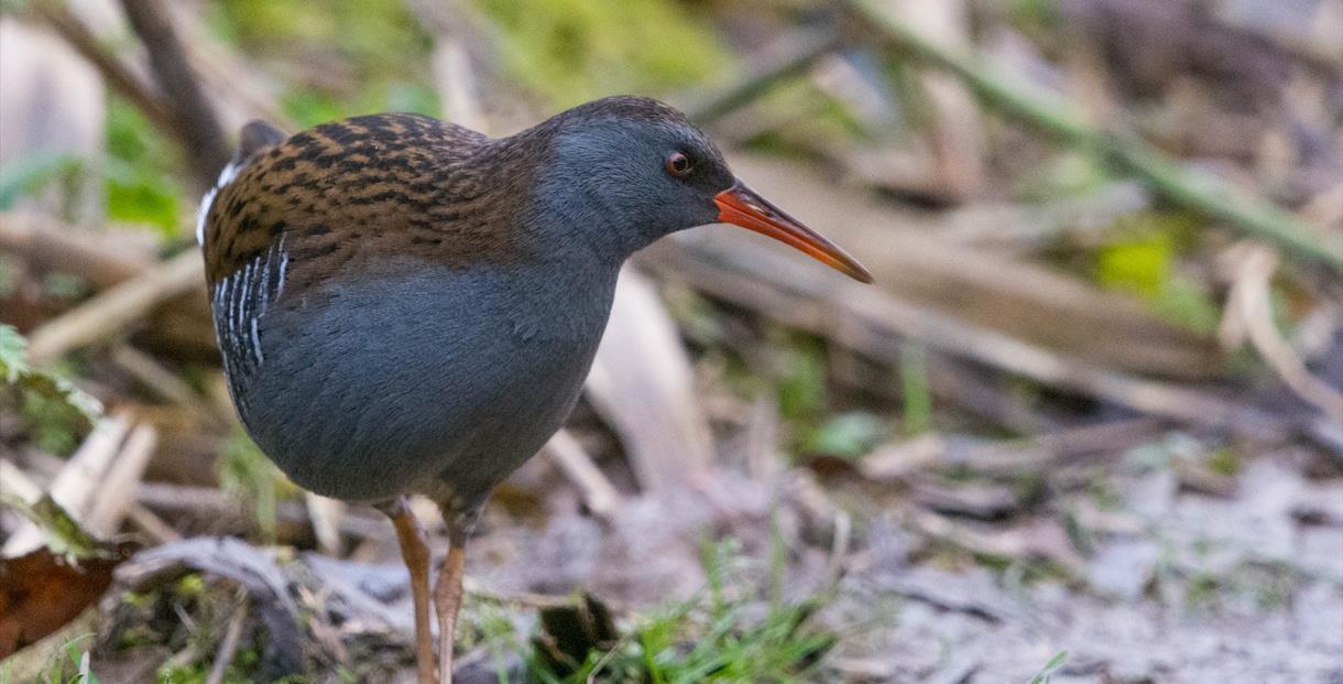 Advanced Birder