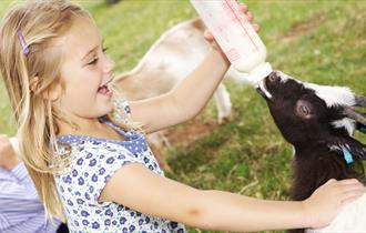 A girl bottle feeding a baby goat at Cotswold Farm Park
