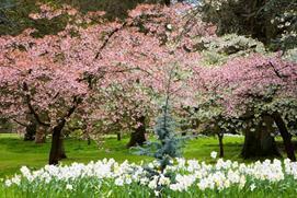 Spring at Batsford Arboretum