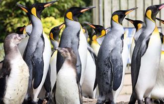 Penguins at Birdland Park and Gardens